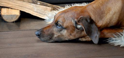 Boen Graphite Oak Engineered Flooring, Brushed, Oiled, 138x3.5x14 mm Image 1